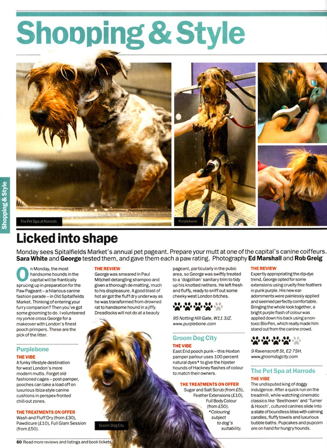 London's best dog groomers