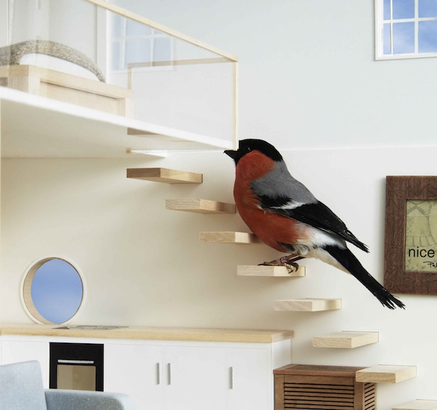 a male Bullfinch enjoys Clas Ohlson's ultimate bird house, complete with inifinity dipping pool and en-tweet master bedroom,  built to encourage more birds back into homeowner's green spaces