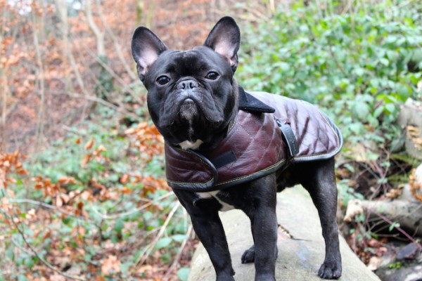 Designer Leather Dog Coats by The Leather Dog Co