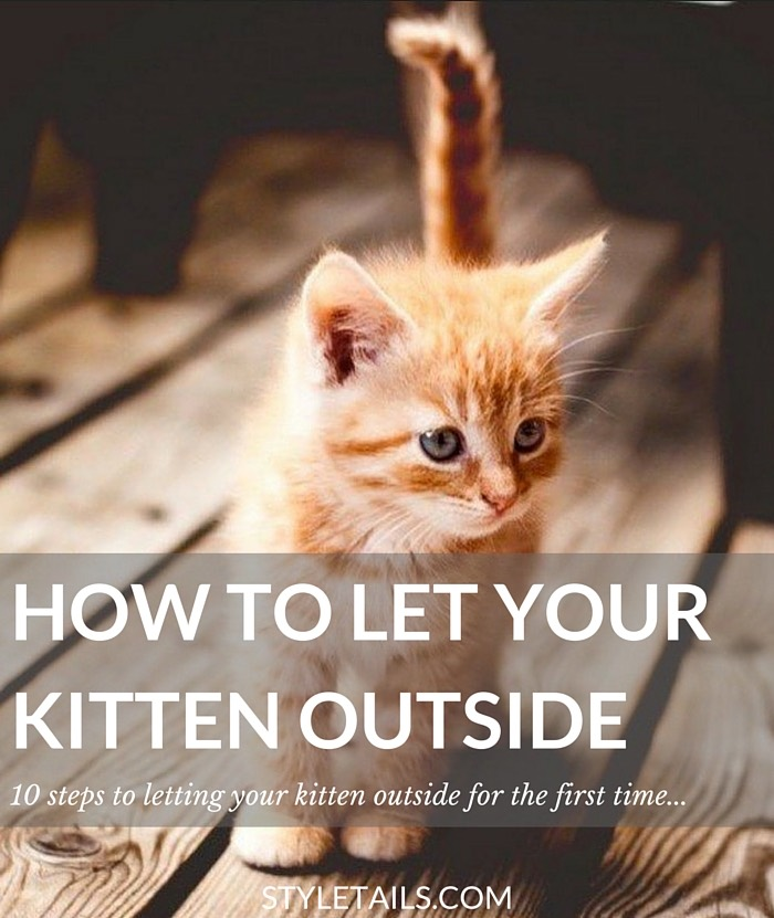 how to let your kitten outside for the first time