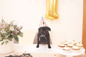 How to Throw an Awesome Birthday Party for Your Dog