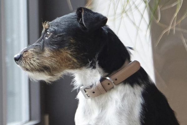 designer leather dog collar styletails