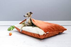WHAT'S HOT: Luxe New Velour Dog Beds by Charley Chau