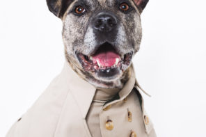 WHAT'S HOT: Luxury Dog Coats & Jackets by happystaffy.me