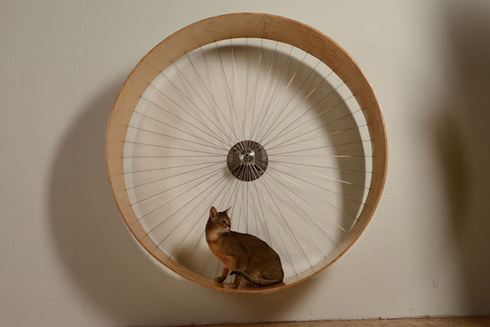 diy cat exercise wheel