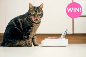 (CLOSED) Win 1 of 3 Motion Activated Cat Bowls from Sureflap worth £49.99!