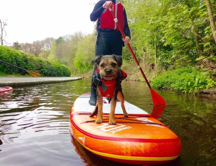 dog stand up paddle boarding