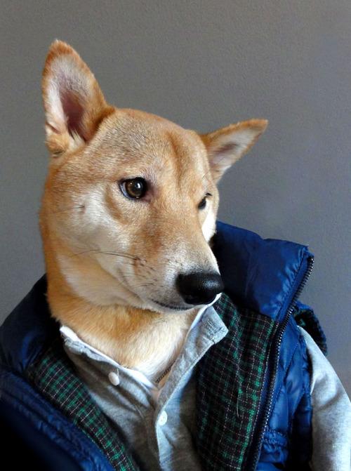 Menswear dog blog