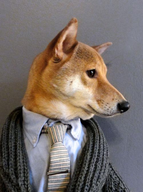 mensweardog3