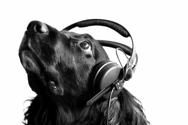 Dog Headphones