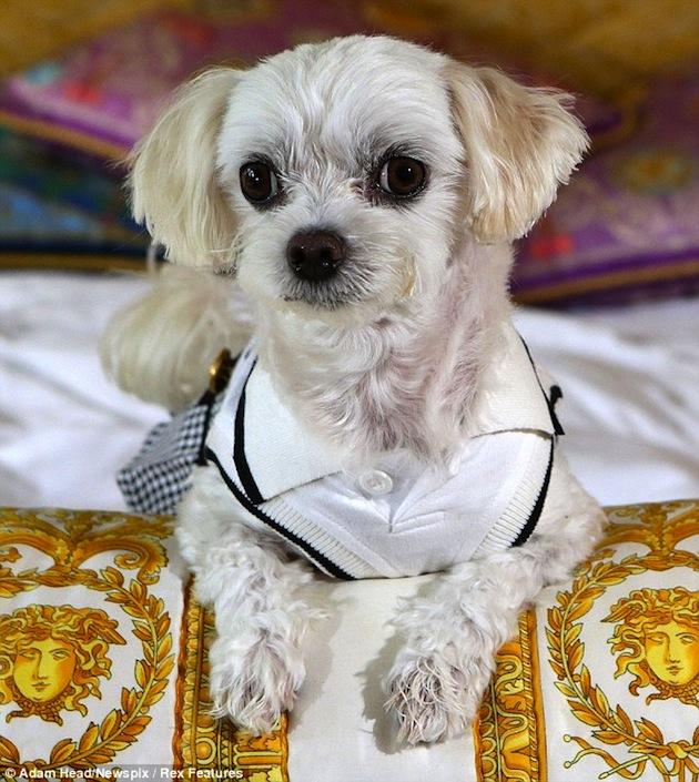 Palazzo Versace Luxury Hotel Australia Dog Friendly