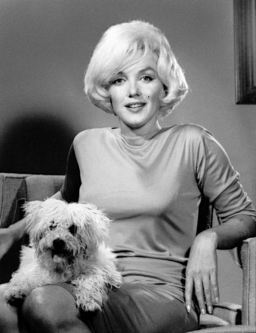 GALLERY | The Glamorous Dogs of Hollywood