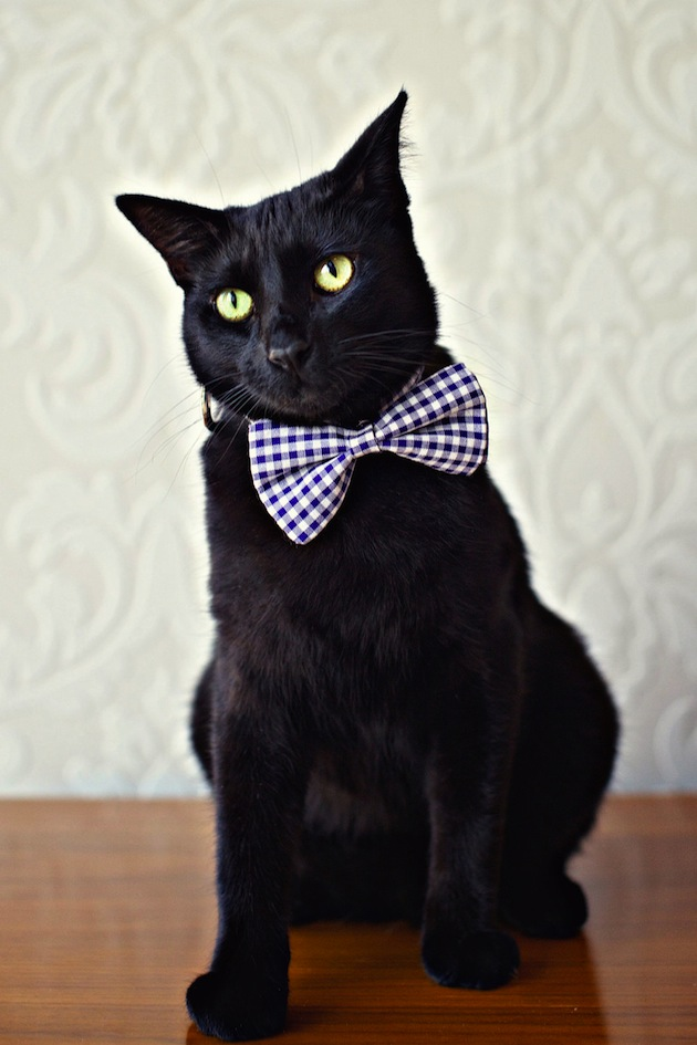 Black Cat Rhinestone Shirt