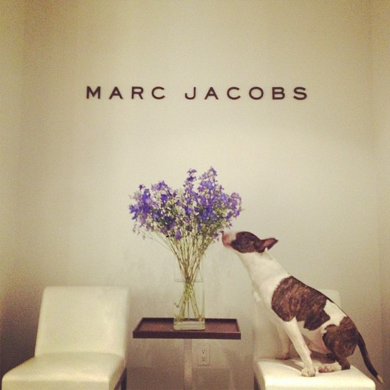 Neville Jacobs Marc Jacobs Dog
