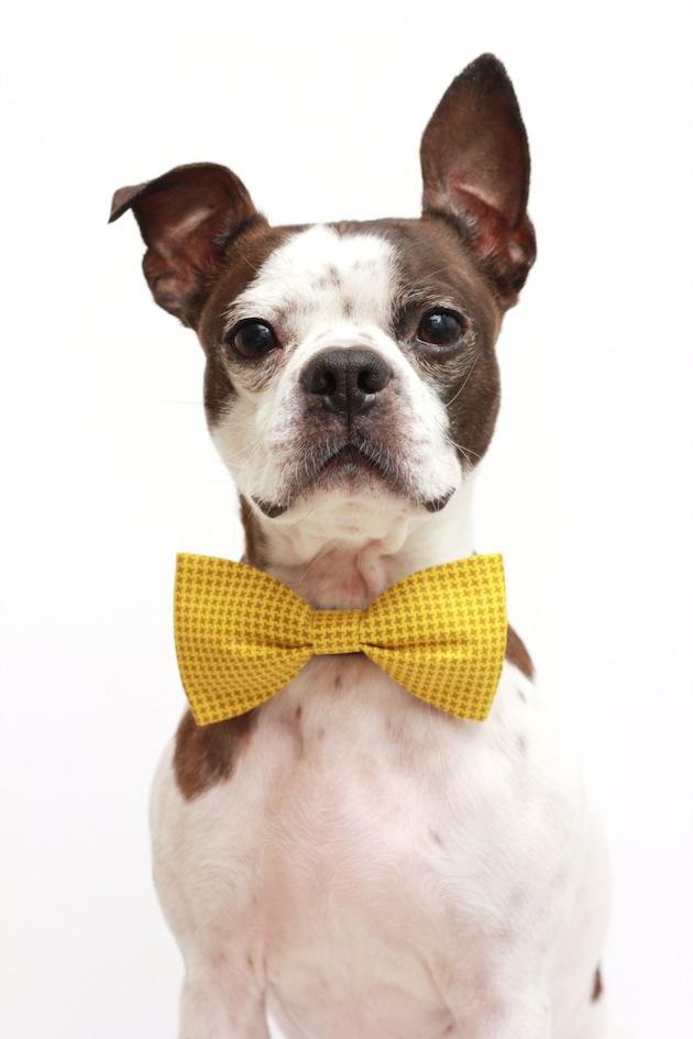 Yellow Dog Bow Tie