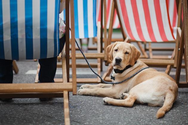 blacklabpictures hyde park dog show-1