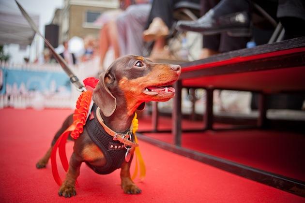 Hyde Park Vet dog show