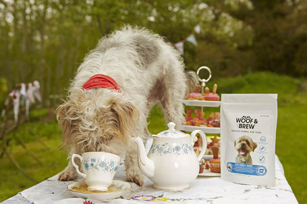 Charis makes the tea for Waffle to test the tea for dogs at Heale House tea room in Woodford Nr Salisbury. Pix:  Charis makes the tea for Waffle to try, using Woof & Brew herbal tea bags  for dogs Copyright Photo  By Les Wilson  Les@leswilson.com  mobile