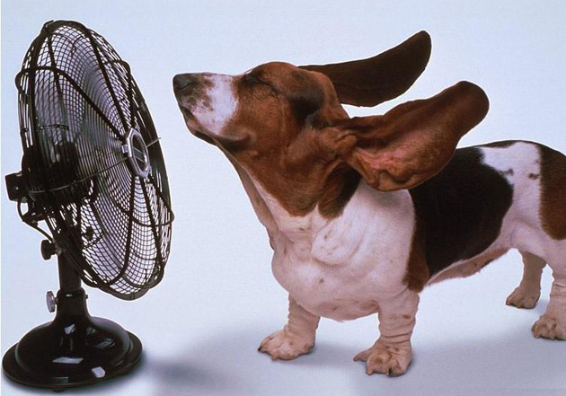 Help pets cool down in summer