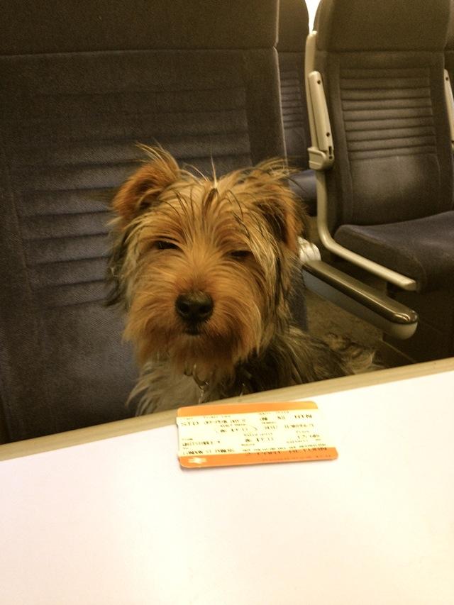 Puppy on train