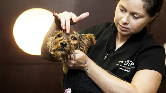 Living London S Best Dog Groomers Styletails