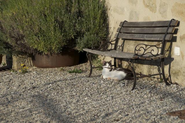 le clair cat