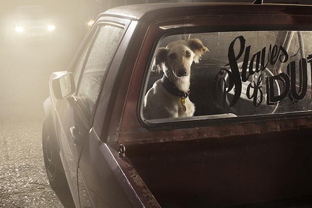 Martin Usborne, Dogs in Cars