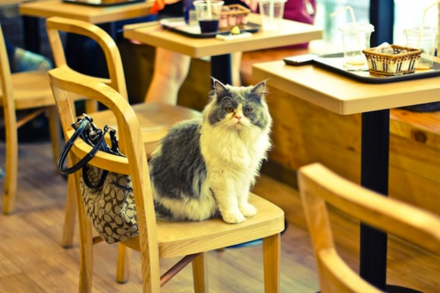 cat cafe set to open in London