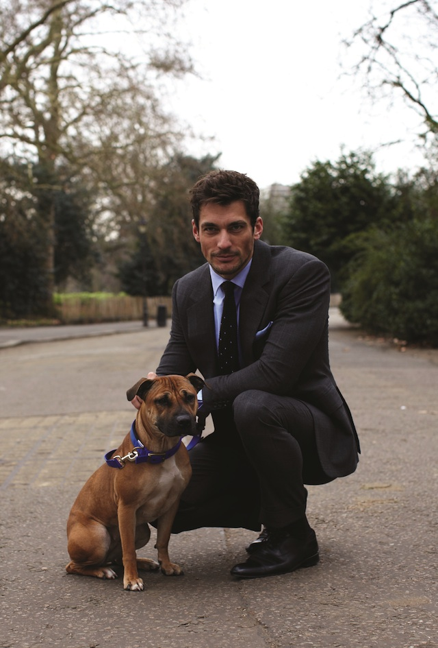 Daivd gandy for Battersea Dogs & Cats Home