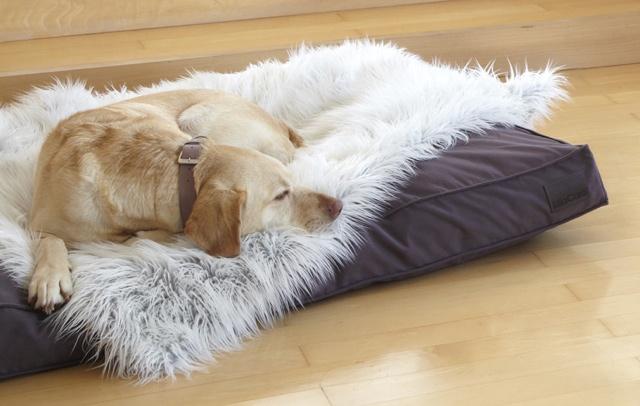 Divano Dog Bed and Luxury Dog Blanket