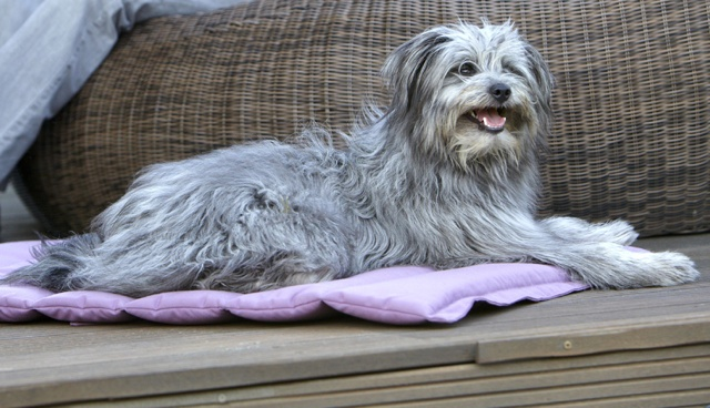 dog travel blanket bed miacara