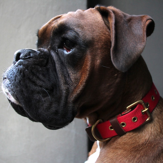 Red dog collar by Bone & Rag