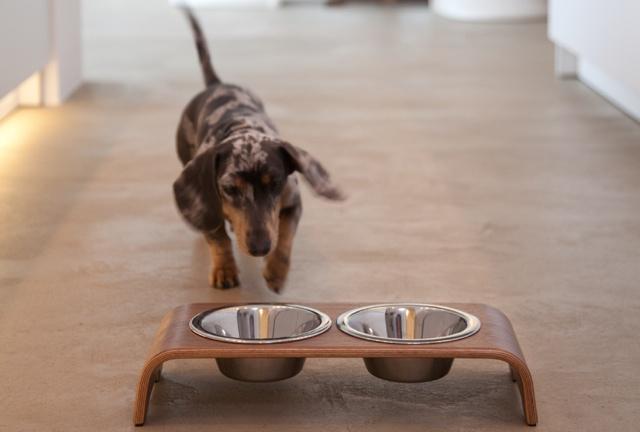 dogbar raised dog bowls