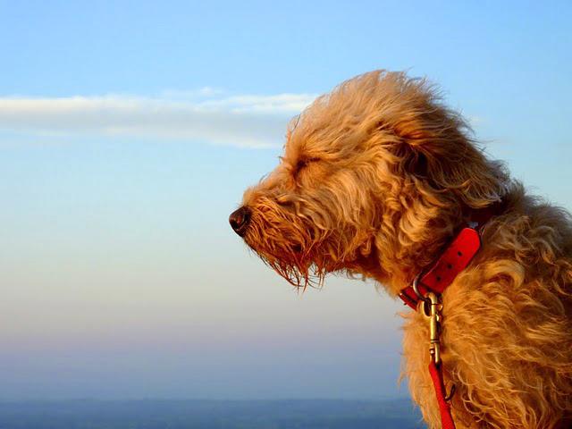 dog friendly breaks in Britain