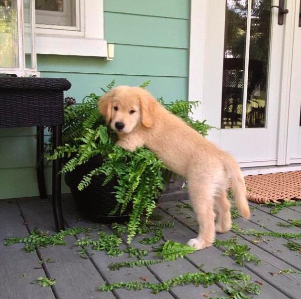 Boomer Planter