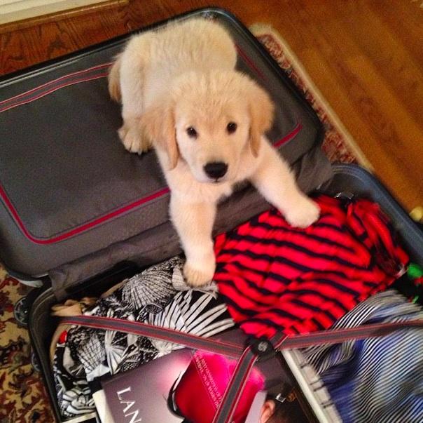boomer suitcase