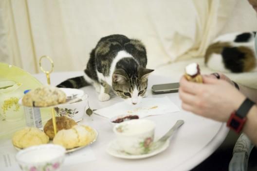 lady dinah's cat emporium london cat cafe