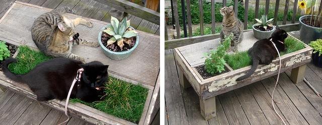 DIY cat table catnip