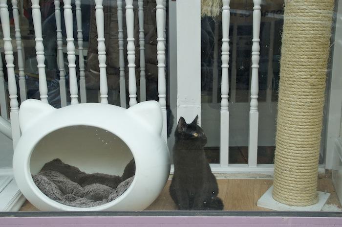 lady dinahs cat emporium cat cafe london