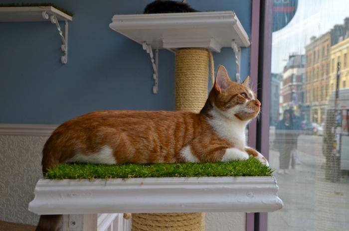 lady dinahs cat cafe 3 700