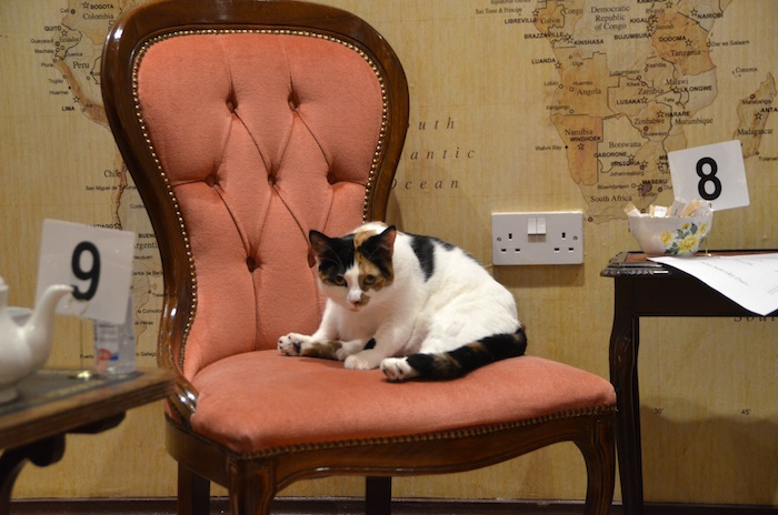 lady dinahs cat cafe london