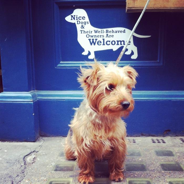 pipsdish dog friendly restaurant london
