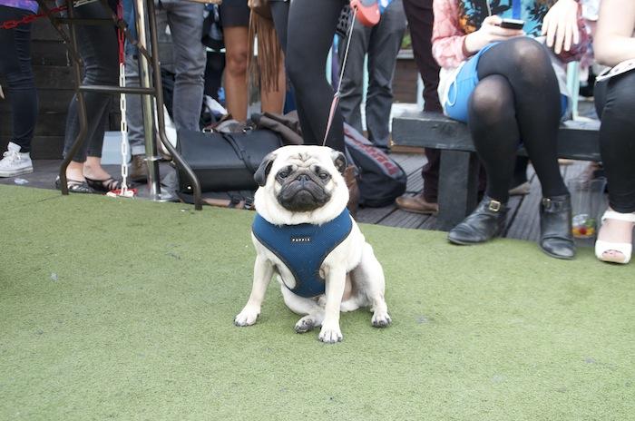 Cannt Crufts Dog Show