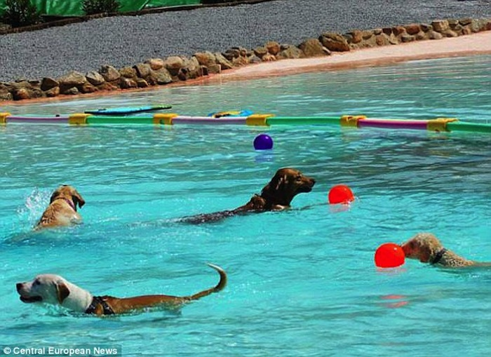 The Resort Canino Can Jane  Dog Water Park
