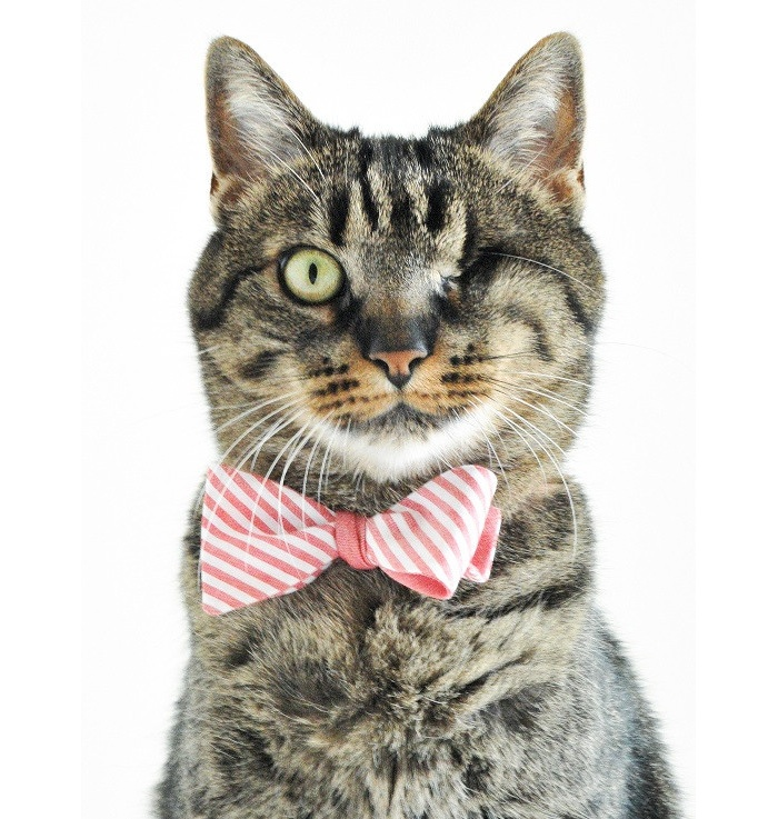 'The Catmiral' Cat Bow Tie
