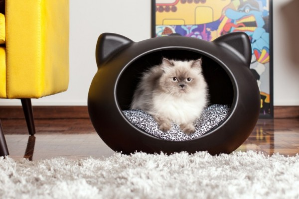 Whats The Best Dog Bed To Buy