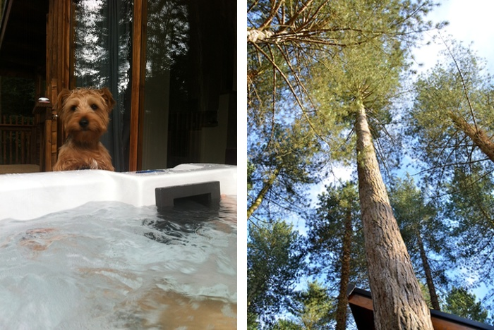 Thorpe Forest Holidays Pet Friendly Cabins