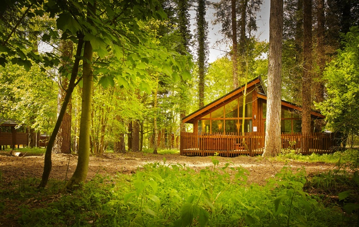 forest holidays pet friendly cabin
