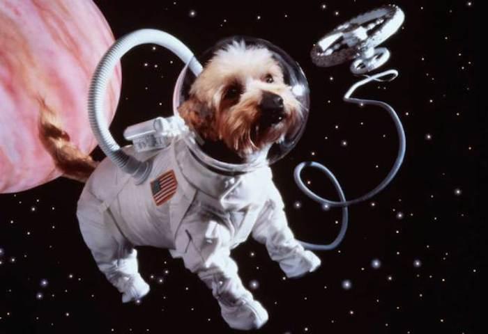 Celestis Pets sends departed pets into space