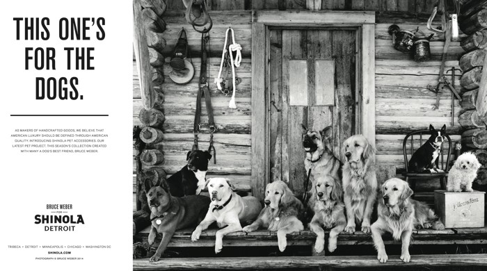 BRUCE WEBER FOR SHINOLA DOG Collars and Leads